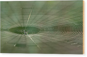 Wood Print featuring the photograph Orchard Orbweaver #2 by Paul Rebmann