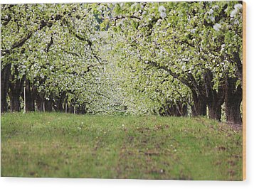 Wood Print featuring the photograph Orchard by Patricia Babbitt