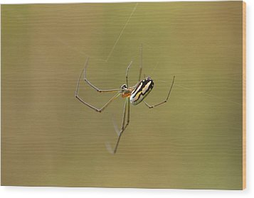 Wood Print featuring the photograph Orchard Spider by Greg Allore