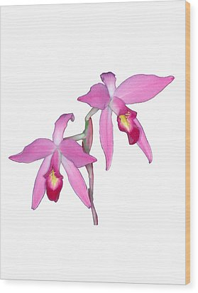 Orchid 1-1 Wood Print