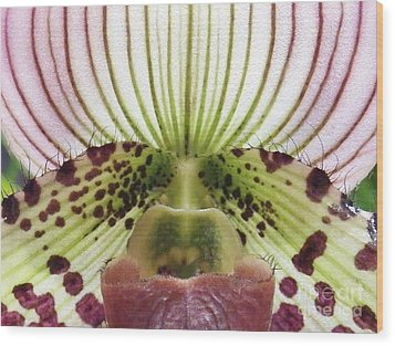 Orchid 1 Wood Print by Judy Via-Wolff