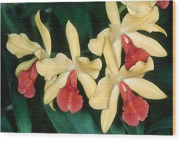Orchid 11 Wood Print