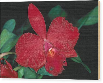Orchid 12 Wood Print