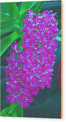 Orchid 14 Manipulated Wood Print