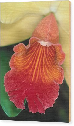 Orchid 16 Wood Print