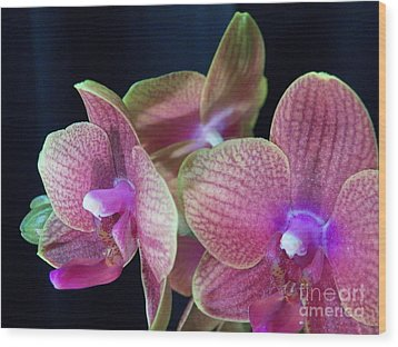Orchid 2 Wood Print by Judy Via-Wolff