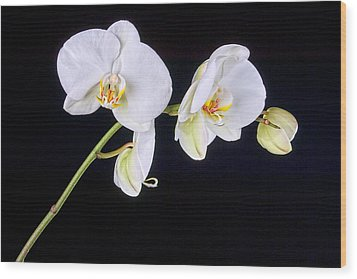 Orchid 2a Wood Print by Mauro Celotti