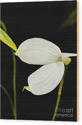 Orchid 3 Wood Print by Judy Via-Wolff