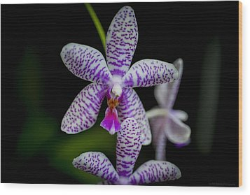 Orchid #3 Wood Print by Phil Abrams