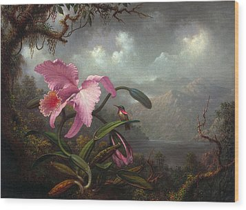 Orchid And Hummingbir Wood Print