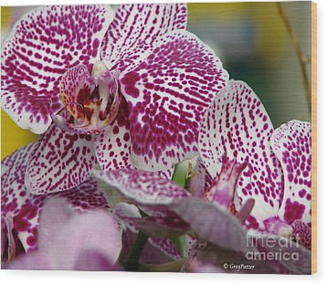Orchid Art Wood Print by Greg Patzer