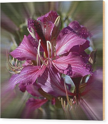 Wood Print featuring the photograph Orchid Blur by Penny Lisowski