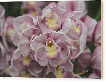 Orchid Bouquet Wood Print by Penny Lisowski