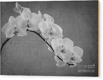 Orchid Bw Wood Print by Hannes Cmarits