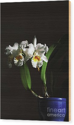 Orchid Cattleya Bow Bells Wood Print by Charline Xia