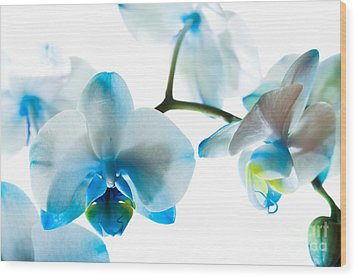 Orchid Closeup Wood Print by Boon Mee