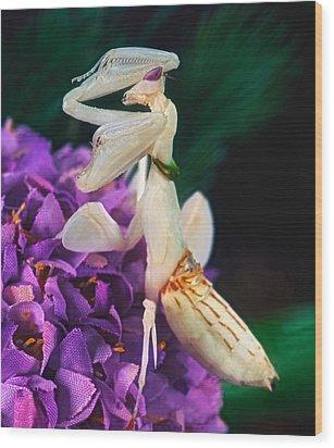 Orchid Female Mantis  Hymenopus Coronatus  9 Of 10 Wood Print by Leslie Crotty