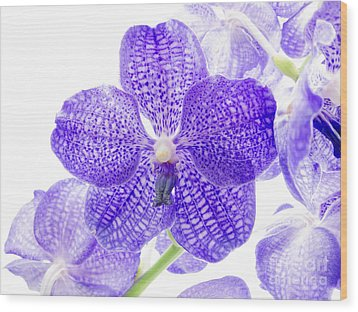 Orchid Flower Wood Print by Boon Mee