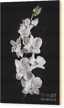 Orchid Flowers On Black Wood Print by Elena Elisseeva