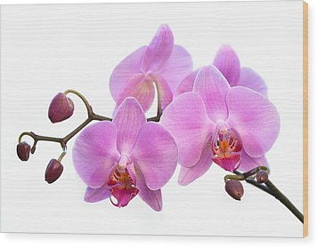 Orchid Flowers - Pink Wood Print by Natalie Kinnear