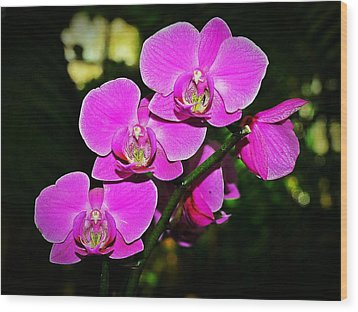 Orchid Flutter Wood Print by Liudmila Di