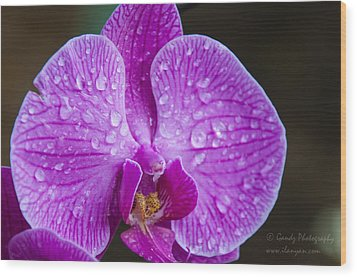 Orchid Wood Print by Gandz Photography