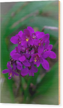 Orchid In Motion Wood Print