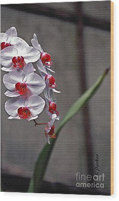 Orchid In Window Wood Print by Linda  Parker