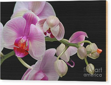 Wood Print featuring the photograph Orchid by JRP Photography