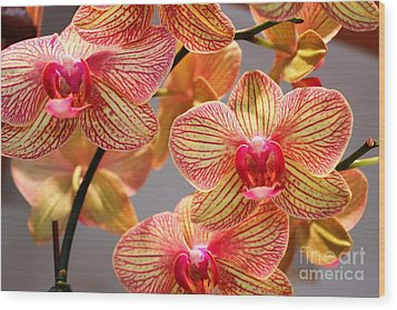 Wood Print featuring the photograph Orchid by Judy Palkimas