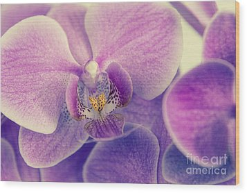 Orchid Lilac Dark Wood Print by Hannes Cmarits