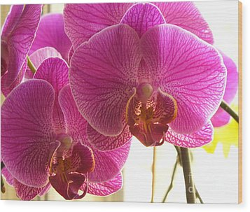 Wood Print featuring the photograph Orchid by Lingfai Leung