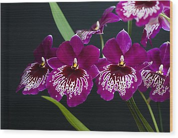 Wood Print featuring the photograph Orchid Miltonia by Lana Enderle