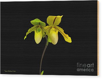 Wood Print featuring the photograph Orchid Paphiopedilum Druid Spring by Susan Wiedmann