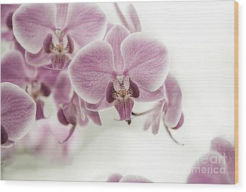 Orchid Pink Vintage Wood Print by Hannes Cmarits