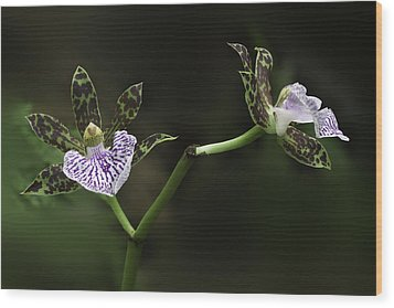 Wood Print featuring the photograph Orchid by Ram Vasudev