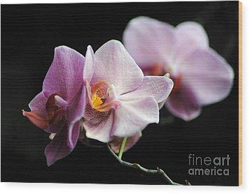 Orchid Wood Print by Randi Grace Nilsberg