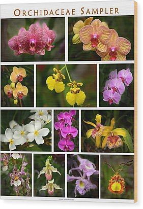 Orchid Sampler Wood Print by Dana Sohr