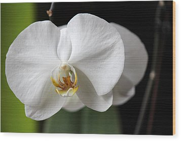 Wood Print featuring the photograph Orchid by Silke Brubaker