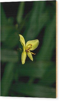Orchid Suspense  Wood Print