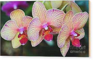 Orchid Trio Wood Print by Kathleen Struckle