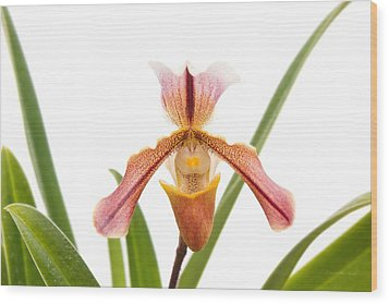 Orchid - Will The Slipper Fit  Wood Print by Mike Savad