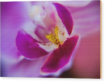 Orchide Detail Wood Print by Kim Lagerhem