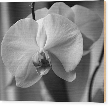 Wood Print featuring the photograph Orchidee by Silke Brubaker