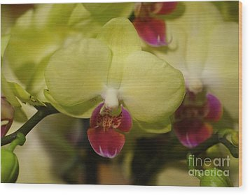 Orchids 181 Wood Print