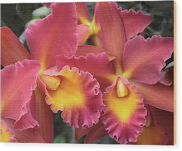 Wood Print featuring the photograph Orchids Ablaze by Harold Rau