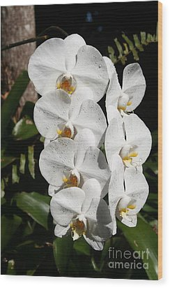 Orchids Anna Wood Print by The Art of Alice Terrill