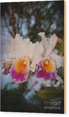 Orchid Elsie Sloan Wood Print by The Art of Alice Terrill