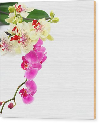Orchids Wood Print by Boon Mee