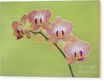Orchids Wood Print by Diane Diederich